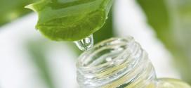 Aloe Vera, la planta curativa más antigua