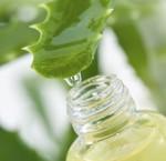 Aloe Vera la planta curativa mas antigua e1339598602685 150x145 Aloe Vera, la planta curativa más antigua