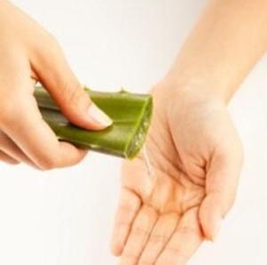 El Aloe cura las quemaduras - Aloe Vera, la planta curativa más antigua