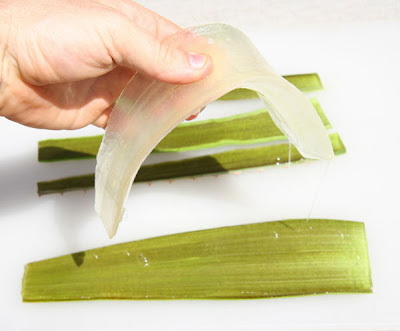 Propiedades de la aloe - Aloe Vera, la planta curativa más antigua