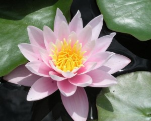 Los beneficios fisicos emocionales y espirituales de la meditacion por mantra e1345314285898 300x241 - Los beneficios físicos, emocionales y espirituales de la meditación por mantra