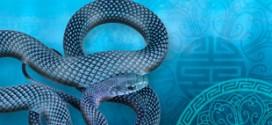 El Ano de la Serpiente de Agua 272x125 - El Año de la Serpiente de Agua