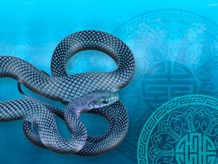 El Ano de la Serpiente de Agua - El Año de la Serpiente de Agua