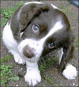 Ritual de Proteccion para Mascotas1 - Ritual de Protección para Mascotas