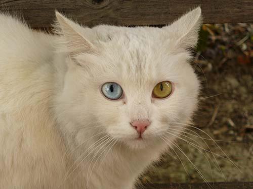 gatos poderes curativos