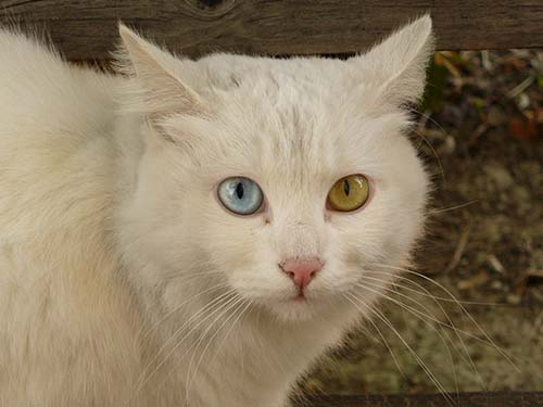 gatos poderes curativos - La ciencia descubre los poderes curativos de los gatos