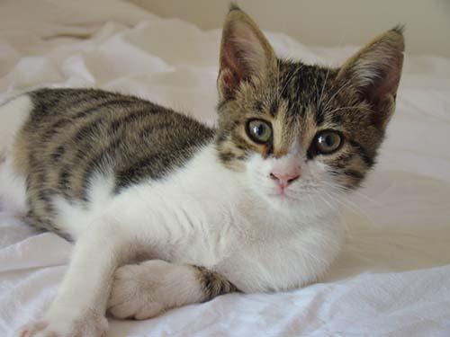 gatos protectores espirituales - La ciencia descubre los poderes curativos de los gatos