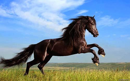 2014 ano caballo - 2014: El Año del Caballo