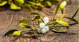 muerdago plantas magicas 310x165 - El muérdago, una de las plantas mágicas más importantes