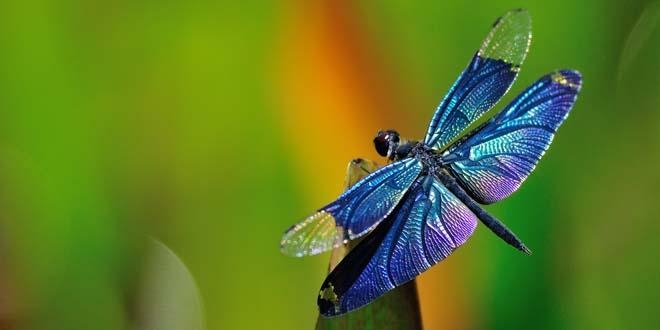 mensaje espiritual libelulas - El mensaje espiritual de las libélulas